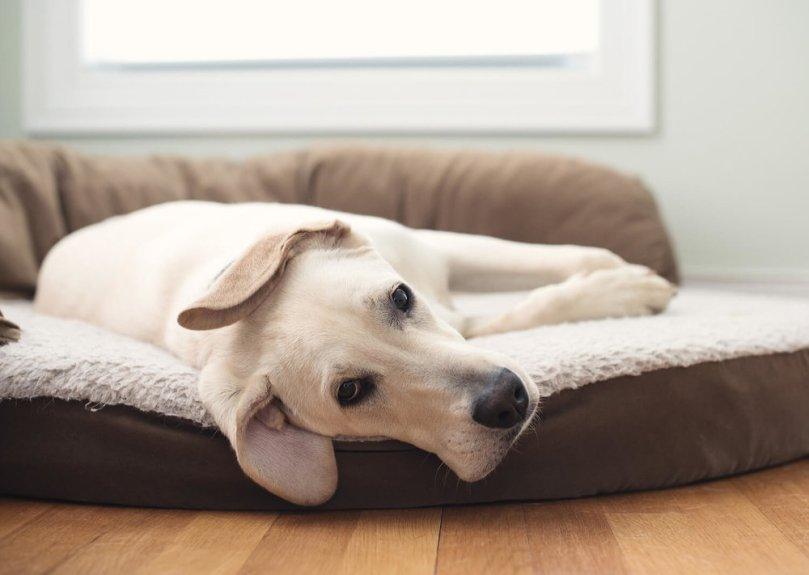 dog bed - real estate closing gifts